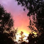 Back Yard Sunset